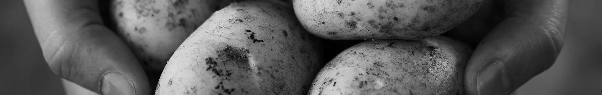 Kartoffeln header