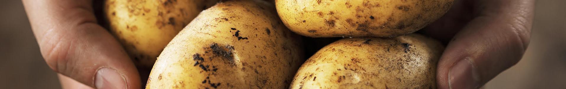 Aardappel header